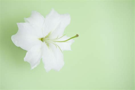 powerpoint background designs nice flower lily