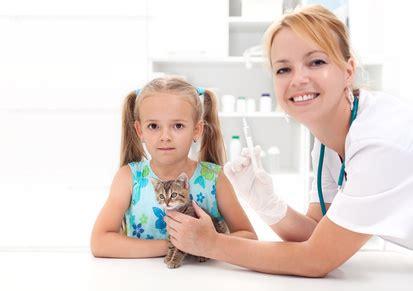 katzenversicherung versicherungsgeizkragende