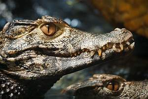 What Lizard Looks Most Like A Dinosaur Page 2 Reptile
