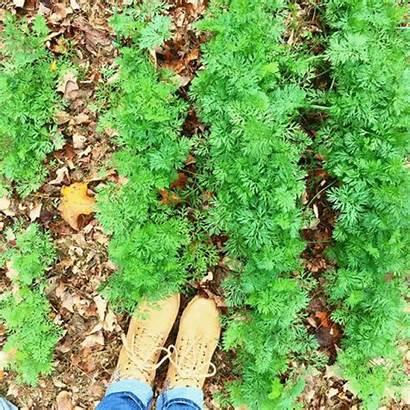 Garden Vegetable Uog Start Seed Join Cool