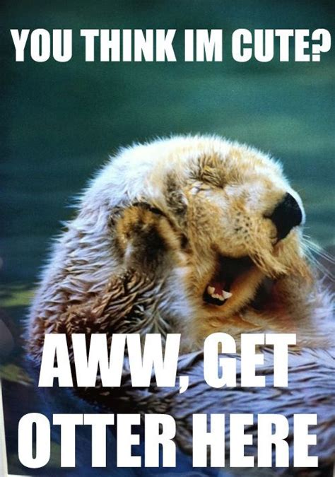In Defense Of Otters So Cute You Think And Love Puns