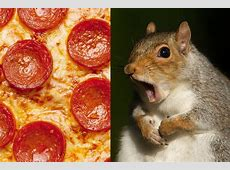 There's a PizzaEating Squirrel in Jamaica Plain – Boston