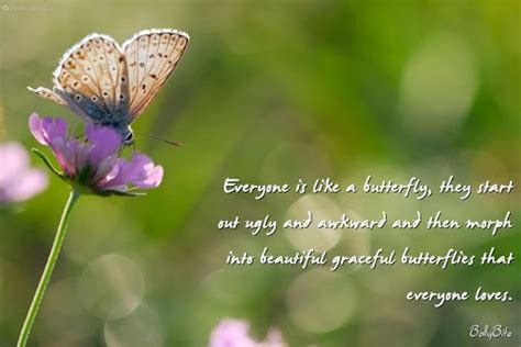 birthday butterfly quotes quotesgram