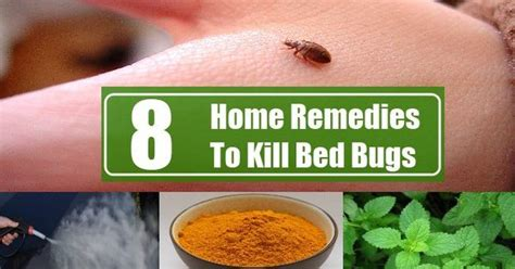 #bedbugtreatment Are You Sufferd From Problem Of Bed Bug
