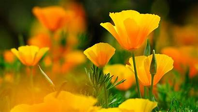 Flower Yellow 4k Flowers Wallpapers Background Backgrounds