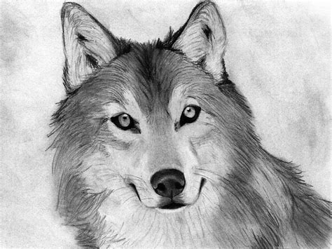 drawn animal charcoal drawing pencil   color drawn