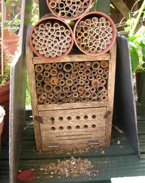 leafcutter bee nests christine farmer