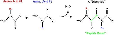 bch 4053 biochemistry i