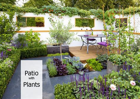 plants on patio how to decorate your patio with plants