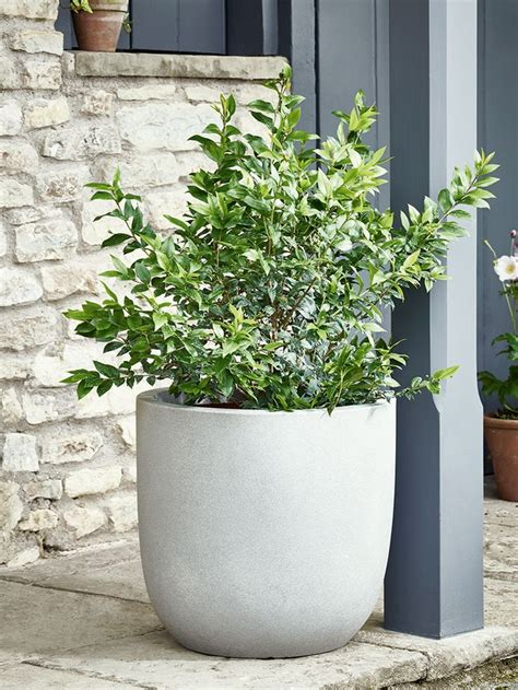 Outdoor Planters by Best 25 Large Outdoor Planters Ideas On