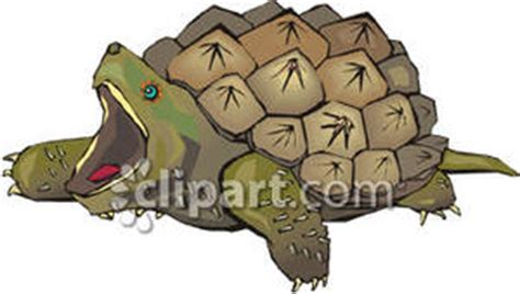 Snapping turtle clipart - Clipground