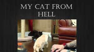 my cat from hell my cat from hell season 5 episode 9 multi million