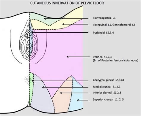 hypertonic pelvic floor vulvodyniapelvic health and rehabilitation center