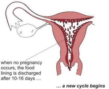 shedding of uterine lining decidual bleeding look like last symptoms signs dx rx