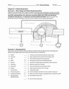 Ch 08 Worksheet
