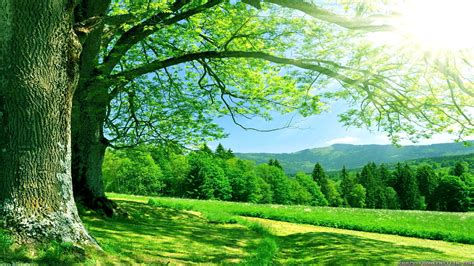 Hd Anime Scenery Wallpapers Pic Of Nature Qygjxz