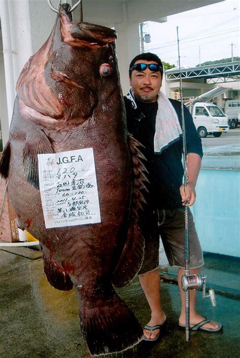 grouper convict record caught epinephelus biggest fish cernia gigante igfa fishes japan lb oc pesce yoshida okinawa kg oz