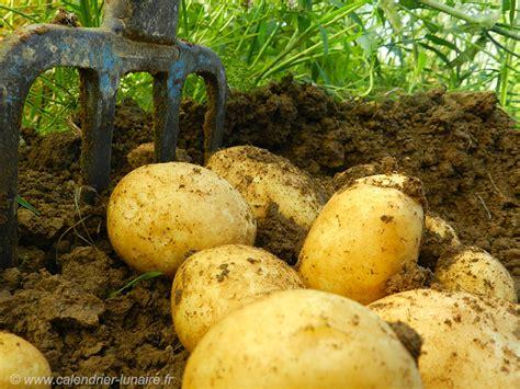 Calendrier Lunaire Plantation Pomme De Terre by Calendrier Lunaire Juin 2015