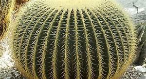 Comment Entretenir Un Cactus : comment entretenir son cactus ~ Nature-et-papiers.com Idées de Décoration