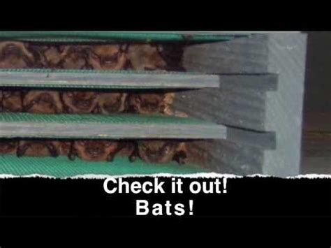 bat houses that attract bats youtube