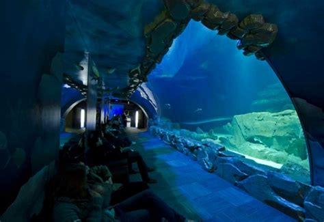 aquarium de lancement d un medusarium le 9 f 233 vrier 2016