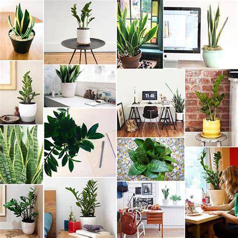 best office desk plants 535 best office plants desk mates images on pinterest