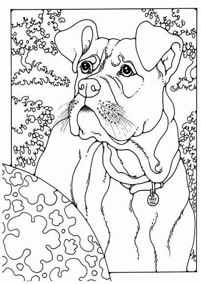 Boxer Coloring Colorare Dog Disegno Kleurplaat Colorear