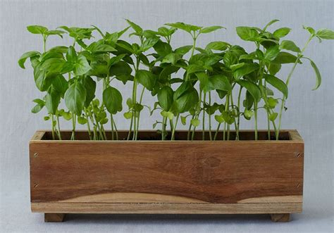Window Sill Herb Garden Box by How To Herb Window Box Secret Garden Window Boxes