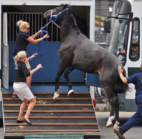 blind why horses horse blindfold