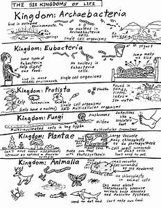 Robin U0026 39 S Great Coloring Pages  Six Kingdoms Of Life