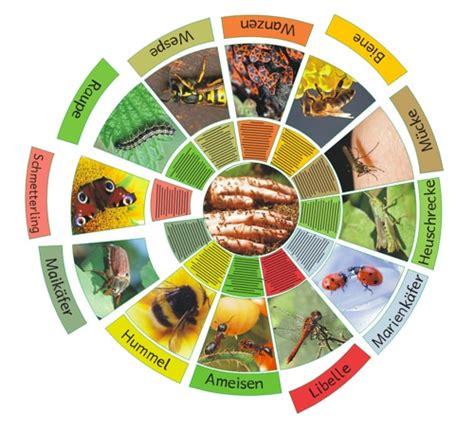 legekreis insekten zaubereinmaleins designblog