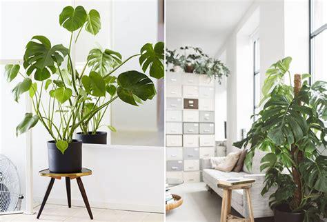 plantes pour bureau décoration bureau plantes