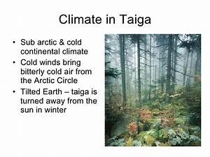 Life In The Taiga : taiga climate bing images ~ Frokenaadalensverden.com Haus und Dekorationen