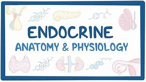 Endocrine System Quiz Anatomy And Physiology