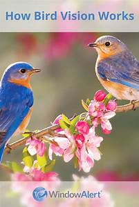 Humans, Vs, Wild, Birds