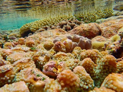 Tautu Reef (Niue) - 2020 All You Need to Know BEFORE You Go (with Photos) - Tripadvisor
