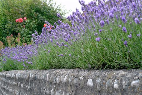 drought tolerant shrubs keeping on trend during 2017 six ways to help the environment in which we live perfect plants