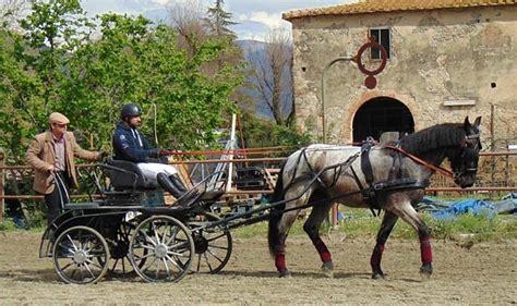 carrozza maratona il cavallo murgese da attacchi carrozze cavalli