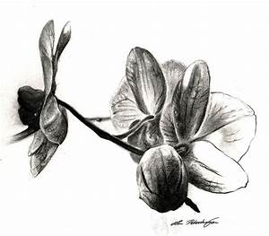Orchids In Black Drawing by Lin Petershagen