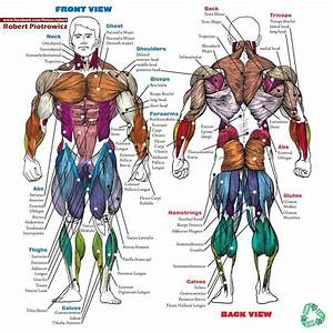 Muscle name | Alpha male | Pinterest | Photos, Exercise ...