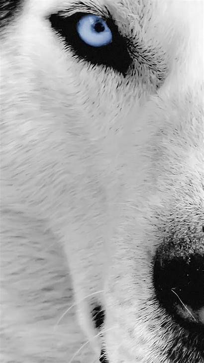 Wolf Eye Iphone Wallpapers Wolves Jour 3wallpapers