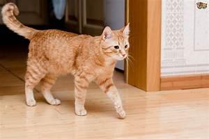 Common cat coat patterns explained   Pets4Homes