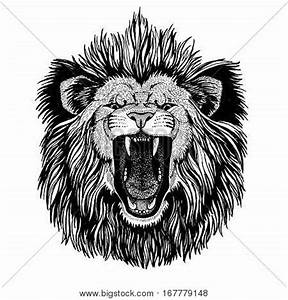 Lion Images, Illustrations, Vectors - Lion Stock Photos ...
