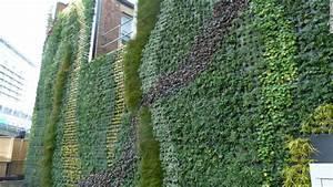 Green, Walls, Create, New, Urban, Jungles