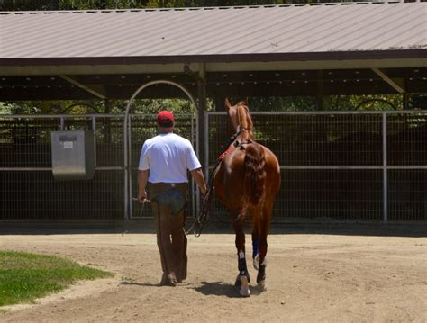 training horse standardbred pony hackney saddlebred lone american star saddlebreds service horses