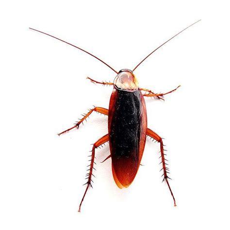 bright hubs    diy pest control  natural