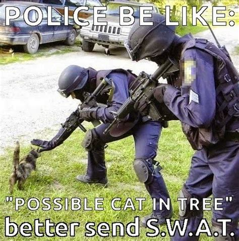 Swat Meme - great cats be funny blog 26 of the funniest cat memes and gifs
