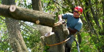 connecticut tree service ez tree and brush removal llc
