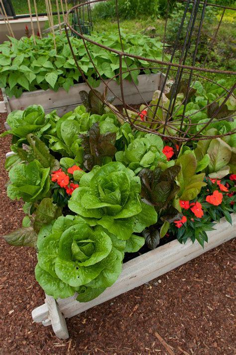 the kitchen garden a salad lover s garden ecker ogden