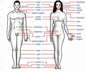 File:Human body features.jpg